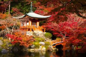 今年は行けないから写真で・・・京都の紅葉は日本の中でも特別だ=中国メディア