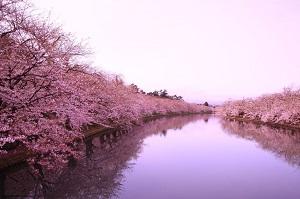 桜が織りなす日本の「ピンク色の川」を見た中国ネット民「見て! ウチの川なんて抹茶色だよ!」
