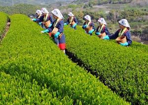 日本というお手本が隣にあるのだから「中国の農業従事者はそろそろ目を覚ませ」=中国報道