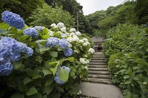 日本の観光都市で「食べ歩き」禁止、意外な議論呼ぶ=中国メディア