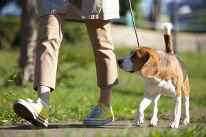 中国にいるイヌの数と日本の人口、どっちが多い?=中国メディア