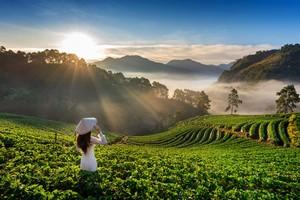 ベトナムの農機販売店を訪問、分かったのは「日本製に対する支持」だった