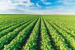 農業先進国日本 最先端の技術から学ぶ勝ちがある=中国メディア