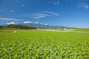 長野県が日本一の長寿県になった理由を探る=中国メディア