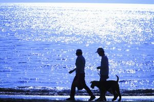 日本人はなぜ水を持ってペットを散歩させるんだ? 中国人から見た日本の興味深い習慣