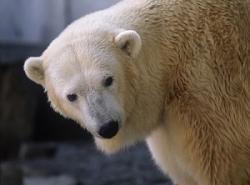 日本最北の小さな動物園が、日本人のみならず中国人にも大人気になった理由=中国メディア