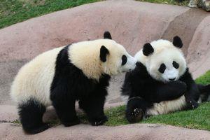 行列3時間、「アレ」の展示・・・日本人のパンダ愛は中国人を超える?=中国メディア