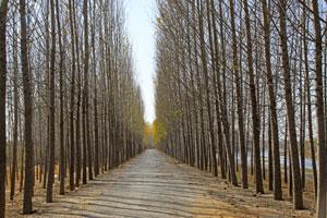 中国農村部の幹部候補が見た日本の「真実の姿」、中国との巨大な差に驚愕