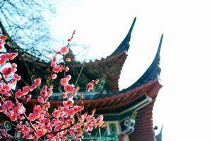 新型肺炎ではっきり分かった! 「日本は尊敬に値する国だった」=中国メディア