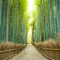 日本を訪れると心が落ち着く・・・「中国人が日本旅行にハマる理由」=中国報道
