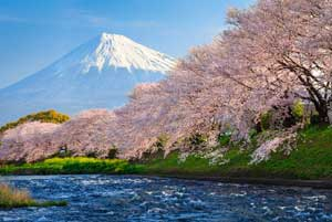 2016年春、多くの中国人が桜をひと目見ようと来日した理由とは