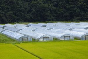 わずかな農地しかない日本、なぜ国民は飢えずにいられるのか=中国報道