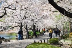 一体中国人は「どれだけ日本が好きなのか」、訪日客がこんなに増えるなんて=中国