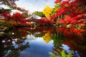 日本社会に存在する「秩序」を感じるたびに「日本人の民度の高さを感じる」=中国報道