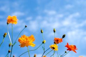 日本で生活して知った・・・「太陽や雨がこんなに美しかったなんて」=中国
