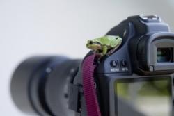 初心者向けからプロ用まで、中国人が日本のカメラを使う理由=中国報道