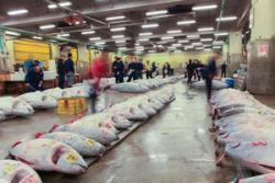 なぜ今年の日本のマグロ初競り価格が、去年の「9割引き」になったのか