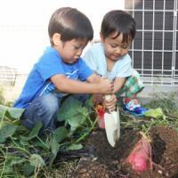 努力・忍耐・協力・・・日本の幼稚園の「イモ掘り遠足」が育てる「日本人の強さ」=中国メディア