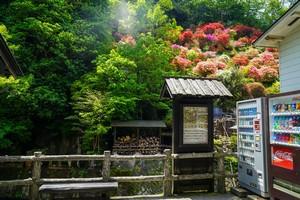 日本に行って体験したからこそ理解できた、日本の素晴らしい点