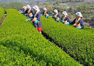 人手不足な日本の農業、外国人にも頼めなくなりつつある=中国メディア