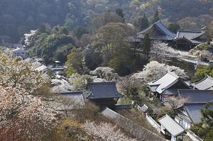 日本のお寺に掲示された素朴な「名言」の数々が、心に刺さる=中国メディア