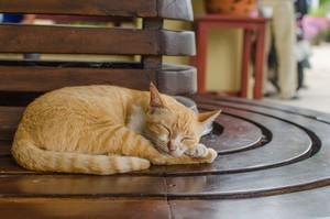 日中で「猫」の待遇に大きな差! 日本人は世界で最も猫好きかも=中国