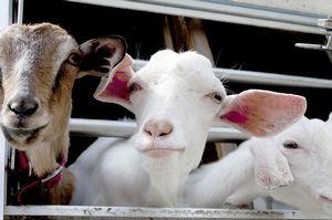 多くの動物が絶滅の危機に瀕する中国で、大量に増やそうとしている「職業」とは?