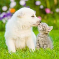 次々と押し寄せるネコブーム・・・イヌ型社会だった日本は「ネコ型社会」になりつつある=中国メディア